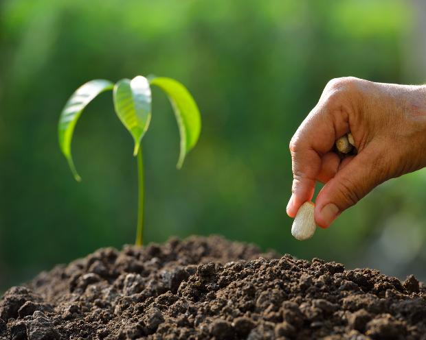 KWS Saat: Oetker-Familie kauft sich ein! Großer Gewinner des Bayer-Monsanto-Deals