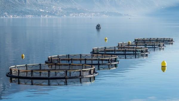 Fish-Farming-Aktien: die bevorstehende Kapitalverlagerung könnte fördernd sein!