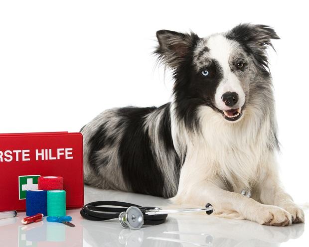 So digitalisiert Heska die Tiermedizin - Nettogewinn wächst um über 100%