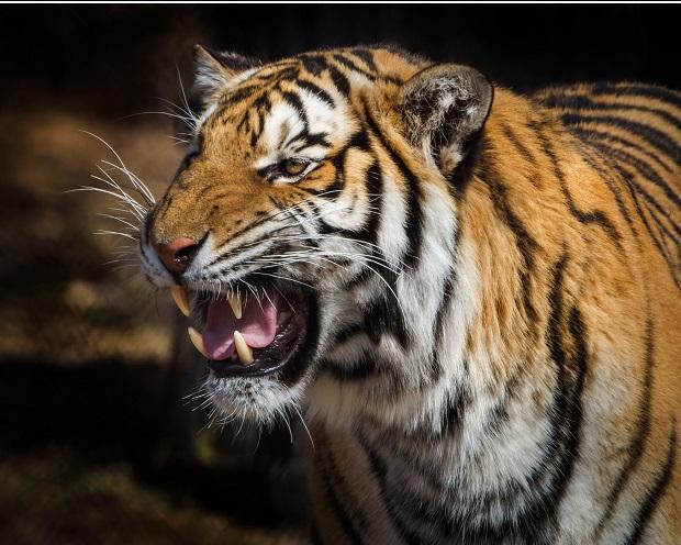 Portfoliocheck: Tiger Cub Steve Mandel nutzt bei dieser Aktie den Kurssturz zum Einstieg - Milliardenumschichtungen auf der Tagesagenda!