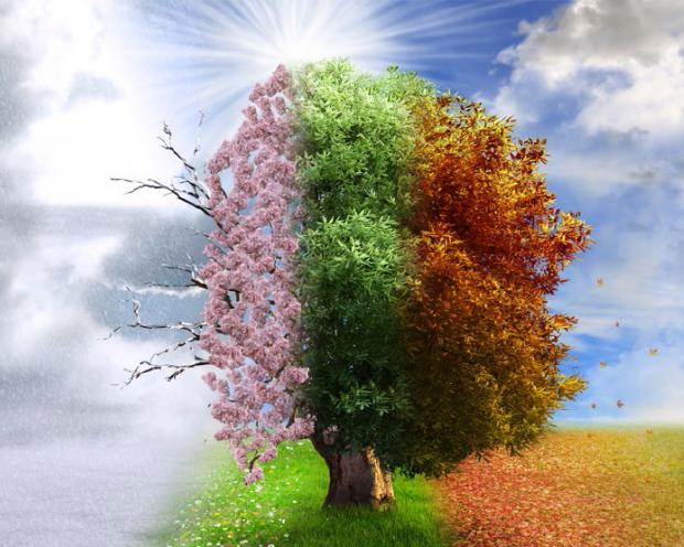 McCormick - Eine Aktie für alle Jahreszeiten