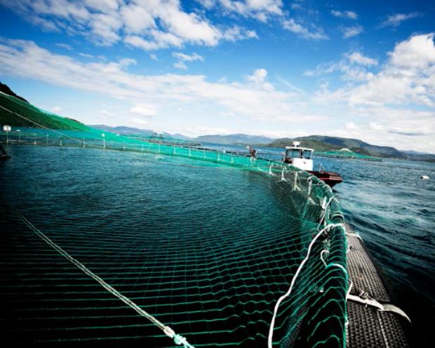 Marine Harvest  - Der Lachspreis steigt, der Rebound läuft und die Expansion nach China kommt auch gut voran!