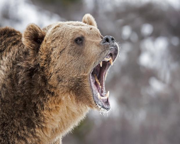 Dax 28. Juli 2017: Werden die Bären jetzt doch nochmal gefährlich?
