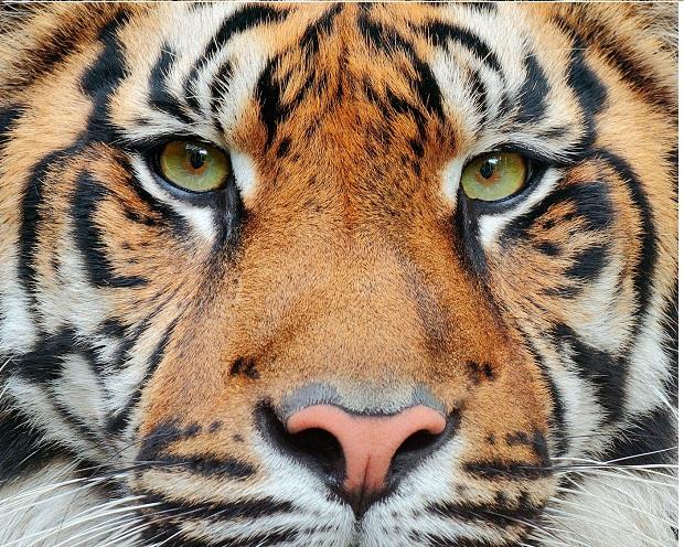 Portfoliocheck: Der Welpe mutiert zum Tiger – Steve Mandel schichtet 25% seines Hedgefonds um!