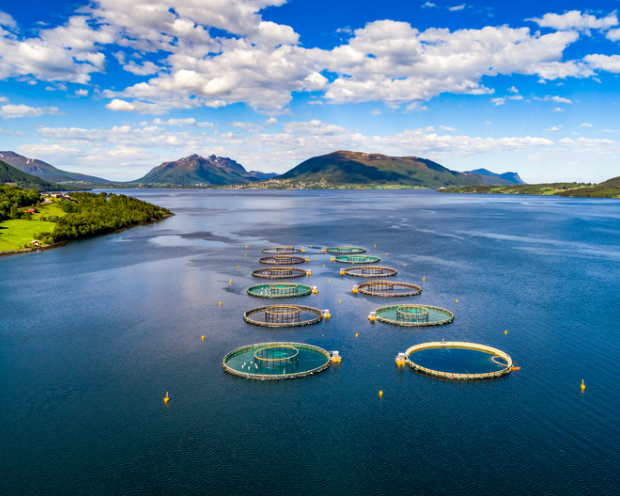 Global Trends im Norden – Warum drei der vier trendstärksten Norwegen-Aktien im Fishfarming aktiv sind