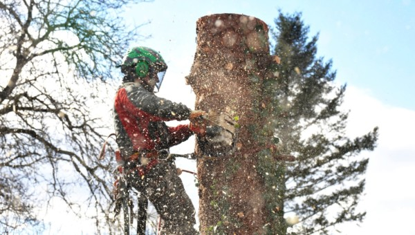 Der Bauboom treibt die Holzpreise nach oben: Top 5+ Stocks, die davon profitieren!