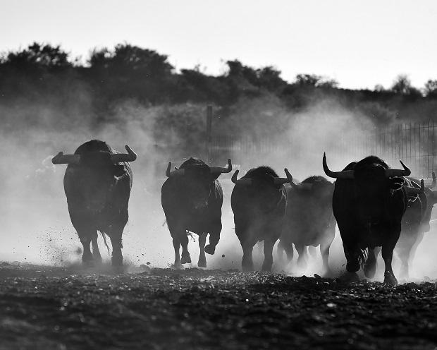DAX Analyse zum 06. November 2017: Wie lange halten die Bullen noch durch?