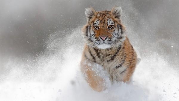 Portfoliocheck: Tiger Cub Steve Mandel schließt 30 Mrd. USD schweren Hedgefonds in 2019 – Das sind seine letzten Transaktionen!