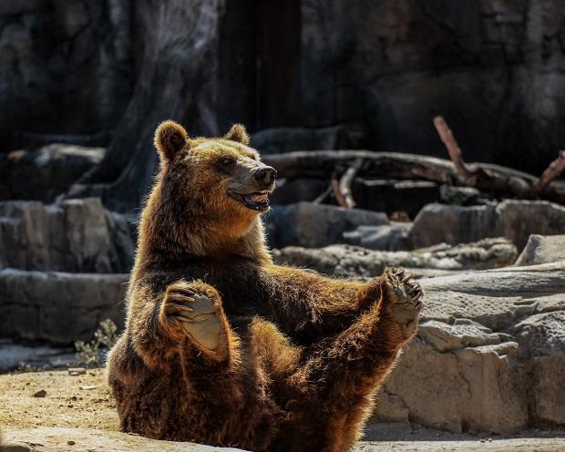 DAX Analyse zum 05. Februar 2018: Müssen wir vor diesen Bären Angst haben?