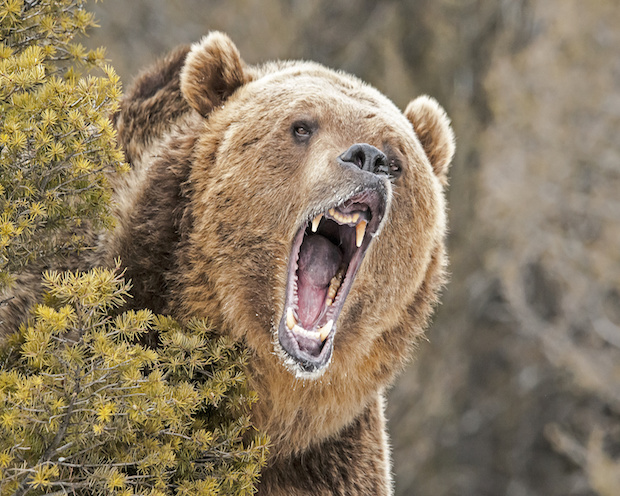 DAX Analyse zum 02. März. 2018: Bärengebrüll
