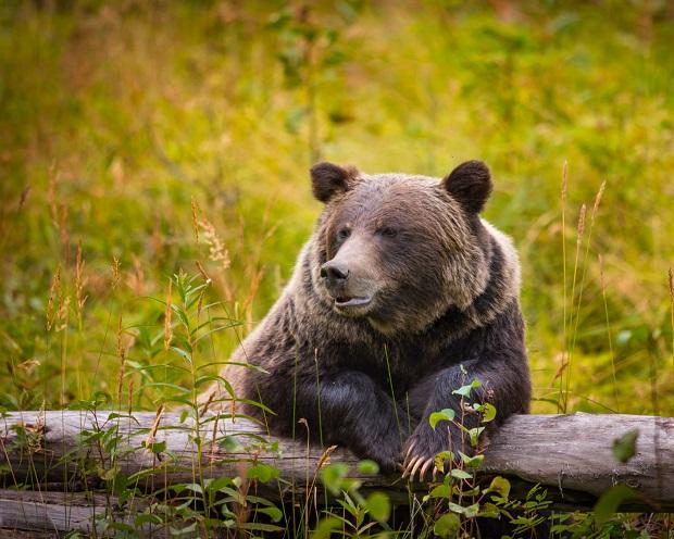 DAX Analyse zum 8. August 2018: zaghaftes Verhalten gleich Chance der Bären?