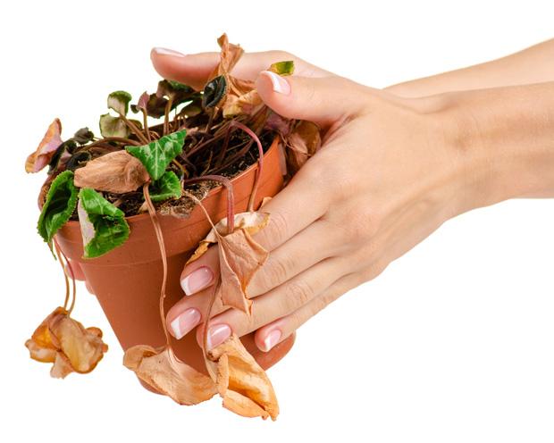 Ewiges Aktien-Börsenspiel von TraderFox: Mit Niedrigzins lässt sich kein Blumentopf gewinnen - Interview mit GoFox