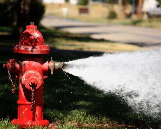 American Water Works Company - Die Weisen erfreuen sich am Wasser