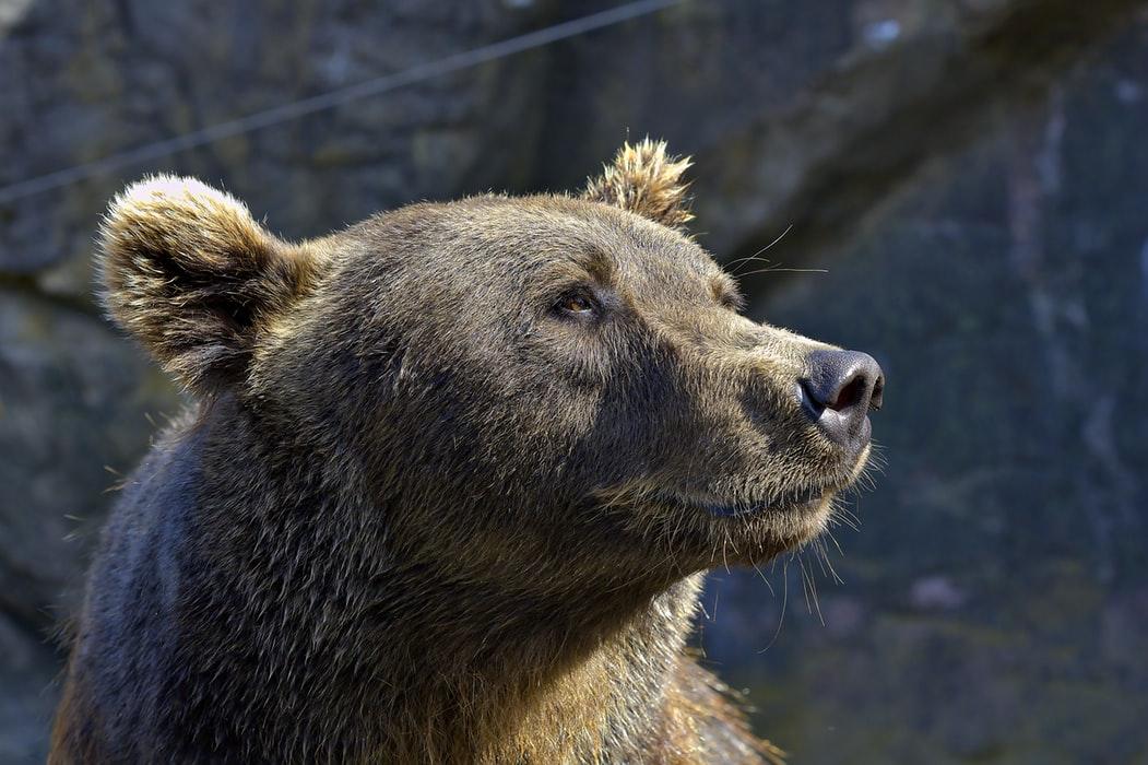 Worauf Anleger bei Börsenkorrekturen/Bärenmärkten achten sollten