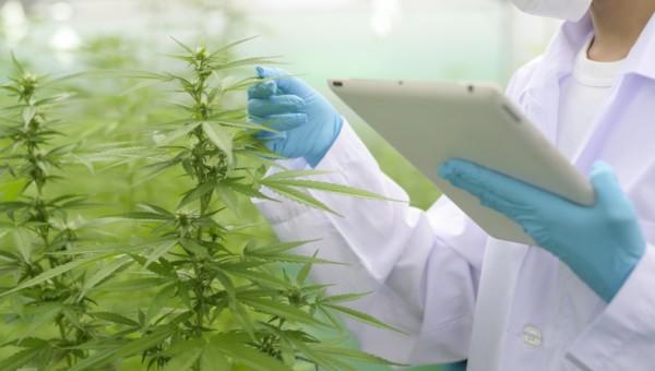 Cannabis-Branche – Aphria und Tilray fusionieren zum größten Cannabis-Produzenten. Wie geht es mit der Branche weiter?