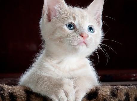 Der Aktienscreener: Wer Tiere liebt, wird diesen Hidden-Champion lieben!