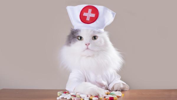 Elanco Animal Health: Medizin für Rind, Hund, Katze