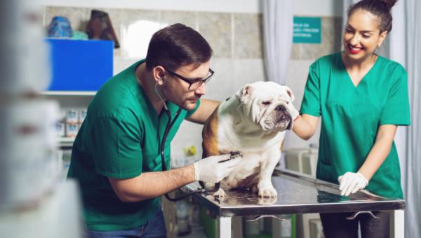 IDEXX Laboratories: Haustier-Boom während der Pandemie